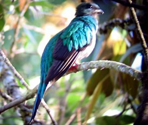 """""""Costa Rica – Im Reich des Göttervogels Quetzal – Naturwunder im karibischen Regenwald"""""""