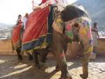 Indie-Rajasthan 2009 - Teil 3 065